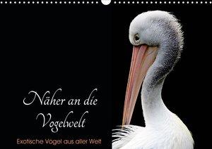 Näher an die Vogelwelt - Exotische Vögel aus aller Welt (Wandkal