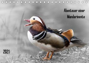 Abenteuer einer Mandarinente (Wandkalender 2021 DIN A3 quer)