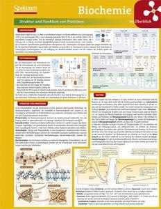 Lerntafel: Neuro- und Sinnesphysiologie im Überblick