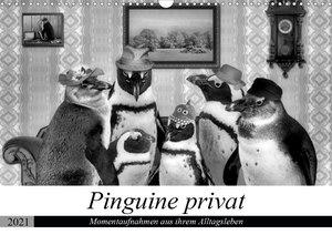 Pinguine privat (Premium, hochwertiger DIN A2 Wandkalender 2021, Kunstdruck in Hochglanz)