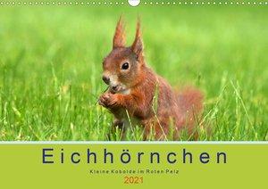 Eichhörnchen im Königlichen Garten (Wandkalender 2021 DIN A3 que