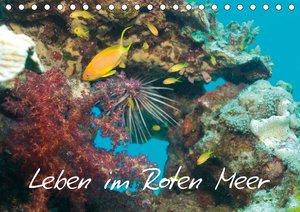Leben im Roten Meer (Wandkalender 2021 DIN A3 quer)