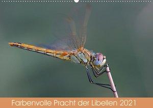 Kleine Insekten ganz nah (Wandkalender 2021 DIN A4 quer)