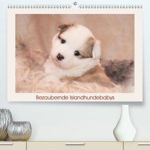 Bezaubernde Islandhundebabys (Wandkalender 2021 DIN A4 quer)