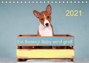 Ein Basenji Baby wird groß (Wandkalender 2021 DIN A2 quer)