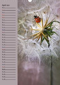 Moment Zauber (Tischkalender 2021 DIN A5 hoch)