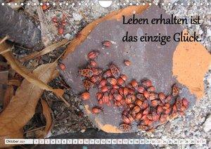 Albert Schweitzer Zitate (Wandkalender 2021 DIN A3 quer)