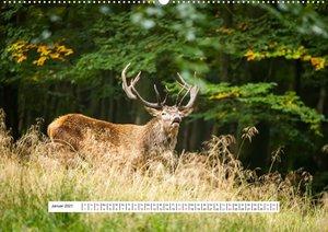 Faszination Schwarzwild (Wandkalender 2021 DIN A2 quer)