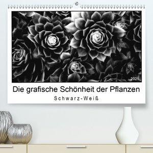 Die grafische Schönheit der Pflanzen - Schwarz-Weiß (Wandkalende