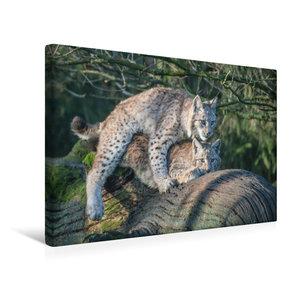 Premium Textil-Leinwand 75 cm x 50 cm quer Eisvogel