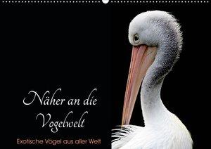Näher an die Vogelwelt - Exotische Vögel aus aller Welt (Tischka
